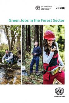 GREEN JOBS THE FOREST SECTOR